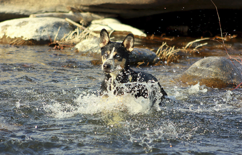 ©Katie Jean Photography | mixed breed playing in river, on location dog portraits