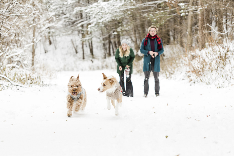 dogs running in the snow, MN snowy pet portraits, ©Lauren Engfer Photography
