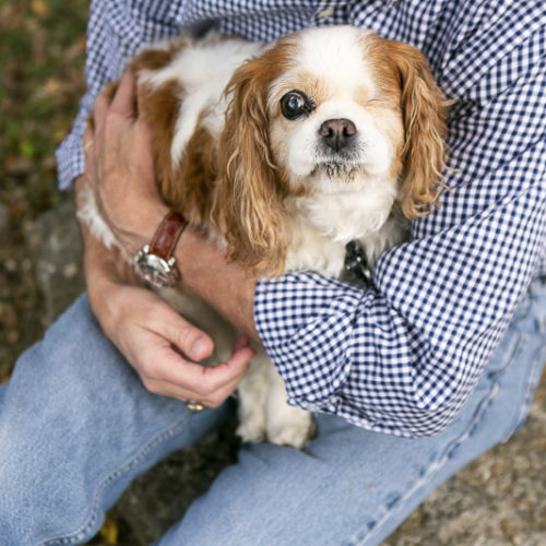 Happy Tails:  Bonnie, Lily, & Chloe the Cavaliers