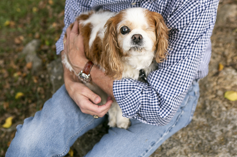 adorable senior King Charles Cavalier Spaniel with one eye, ©Mandy Whitley Photography | Nashville lifestyle dog portraits