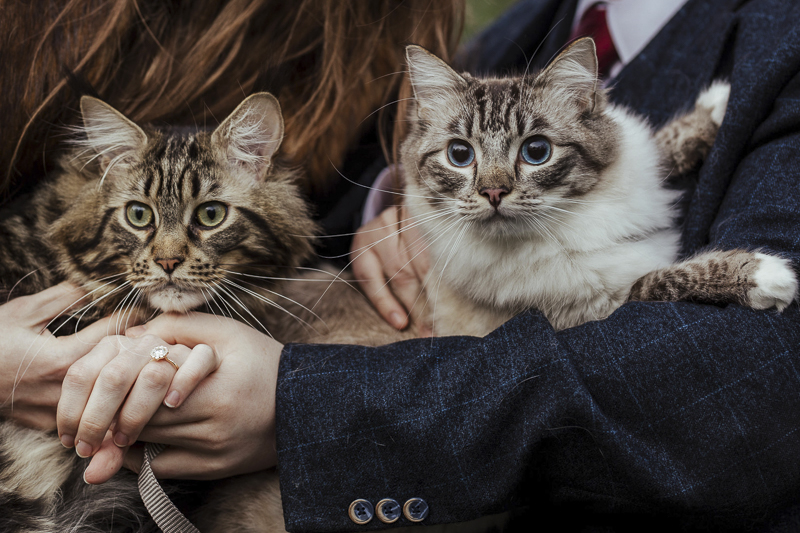 engagement photos with cats, Maine Coon cat and Ragdoll Cat, ©Olga Hogan Photography | cat-friendly engagement photos, Dublin, Ireland