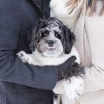 Dog-Friendly Winter Engagement Photos | Reston, Virginia