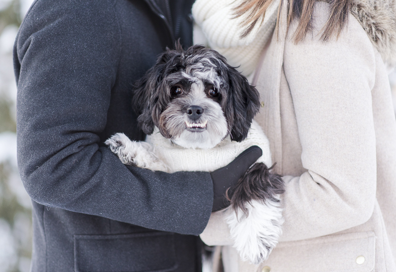 Shih-Tzu mix with big underbite, Shichon | ©Rebecca Sigety Photography