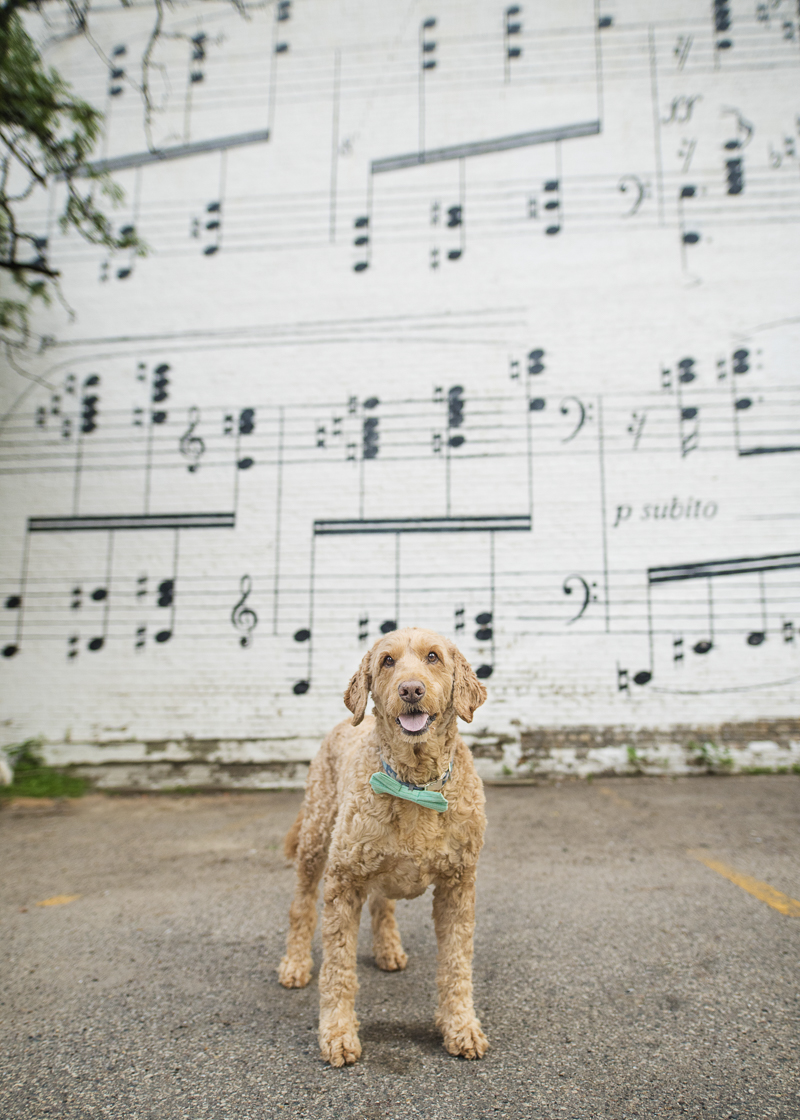dog in front of music sheet music mural, Schmitt Music, Minneapolis | ©About A Dog Photography