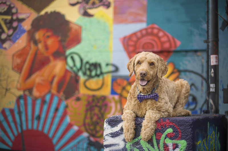 handsome dog in front of mural, About A Dog Photography