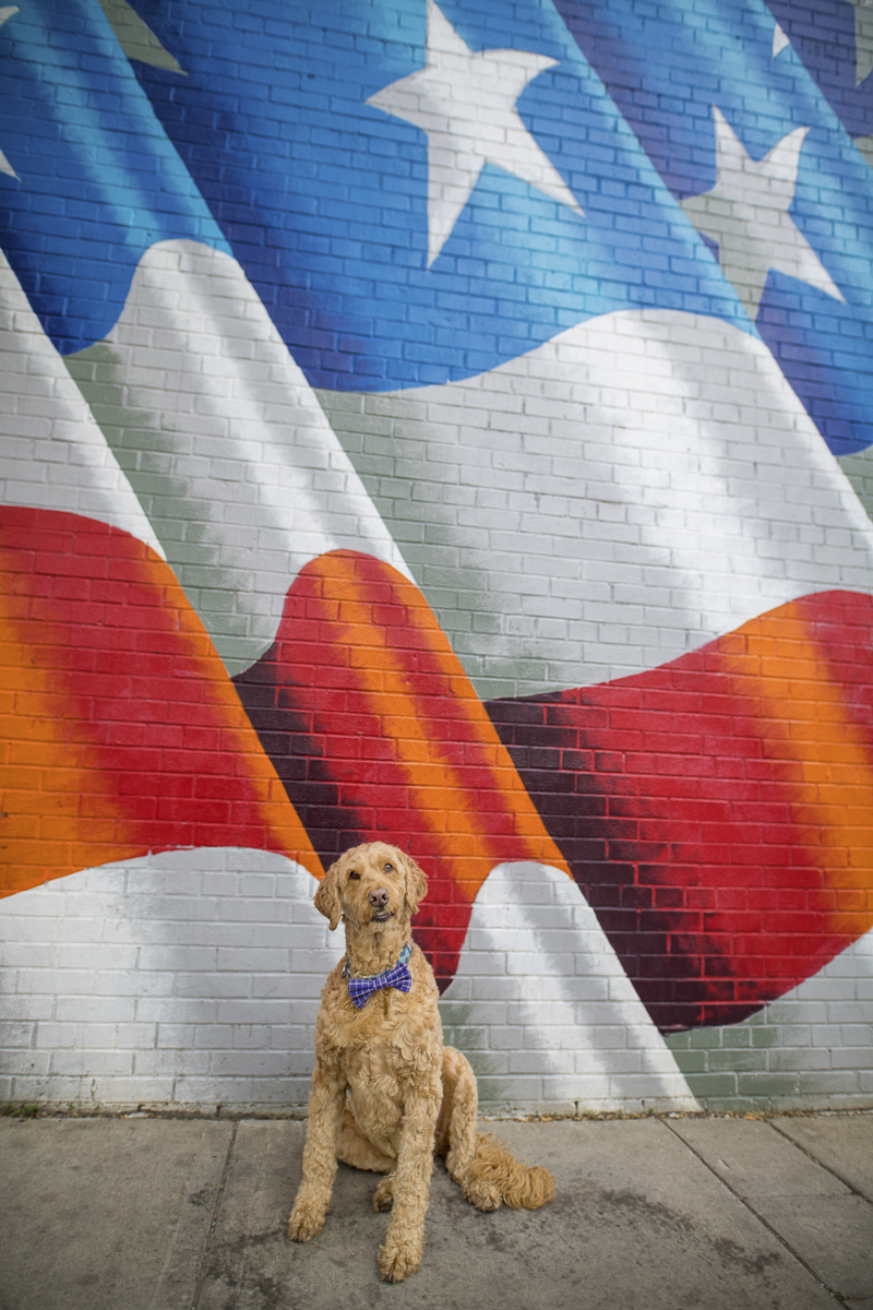dog in front of American Flag mural, Minneapolis | About A Dog Photography