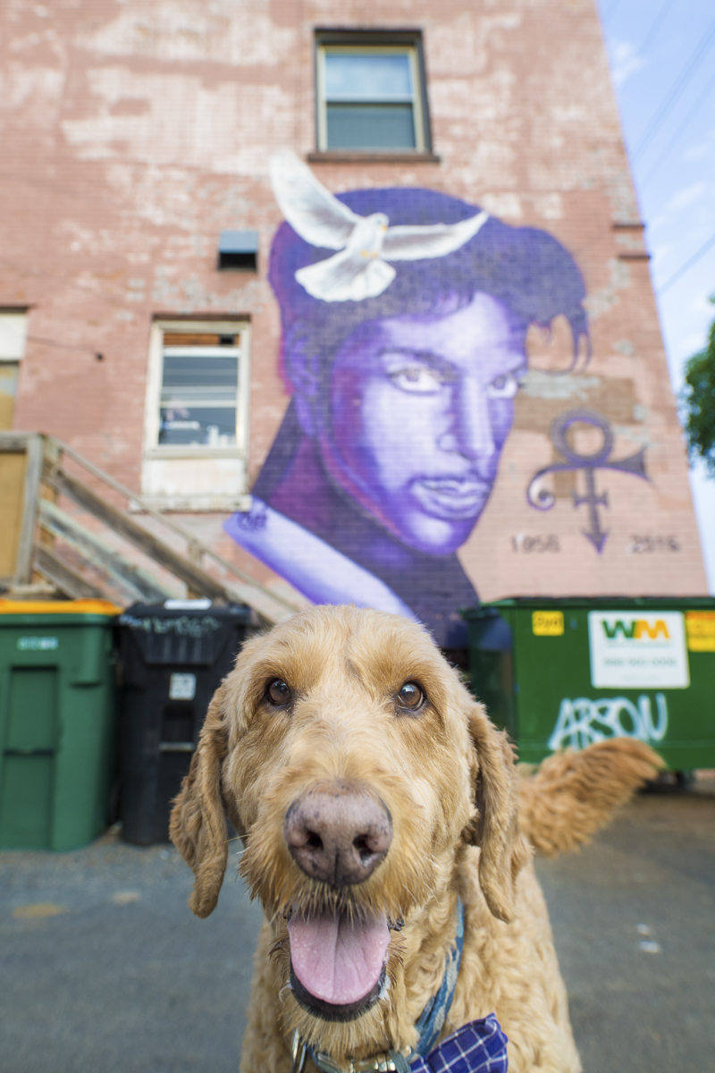 Spencer the Goldendoodle in front of Prince mural | About A Dog Photography