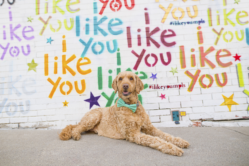 """dog wearing green bow tie in front of """"i like you"""" mural, Minneapolis 