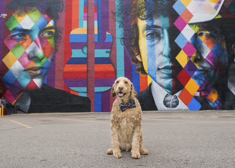 Spencer the Golden Doodle and Bob Dylan mural, Minneapolis | About A Dog Photography