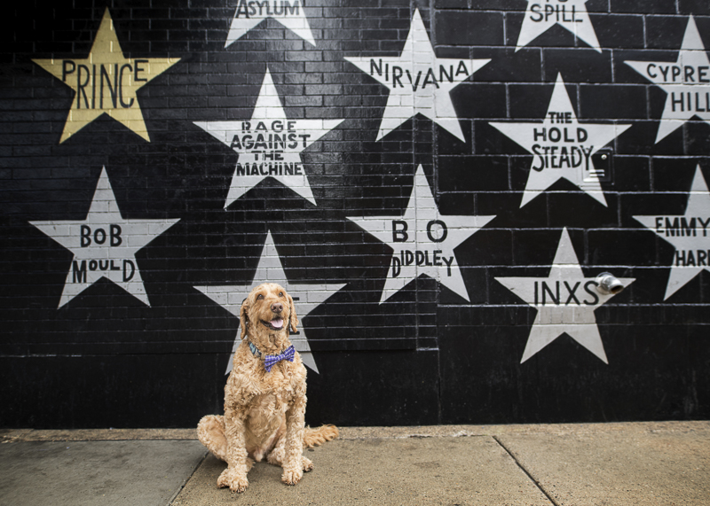 Spence, the Goldendoodle, sitting in front of First Avenue Stars Mural | About A Dog Photography
