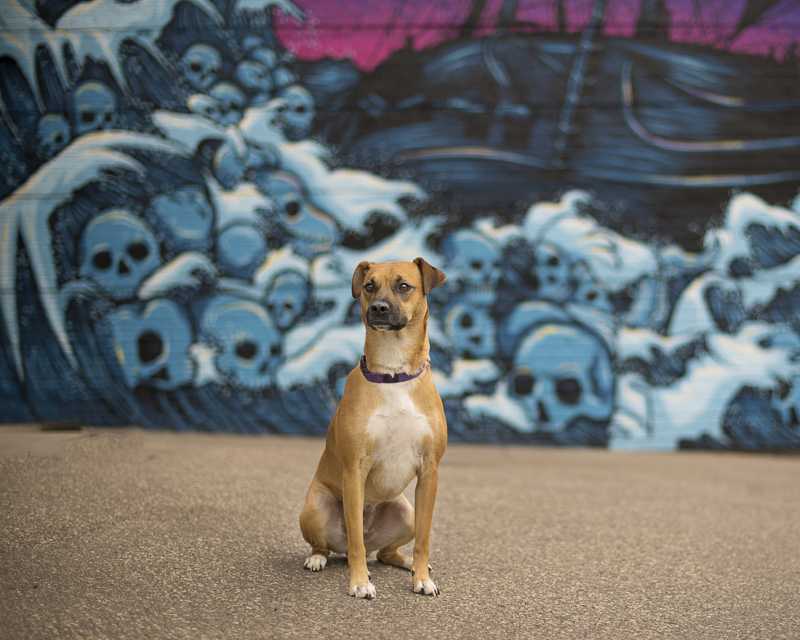 cute dog in front of mural, dogs and art | About A Dog Photography