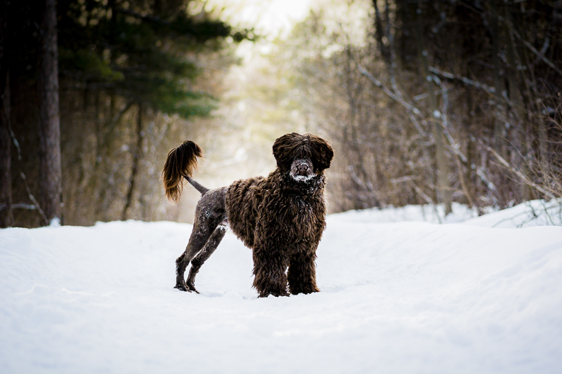 handsome dog in snow, ©Beth Alexander Photography | winter dog photography ideas