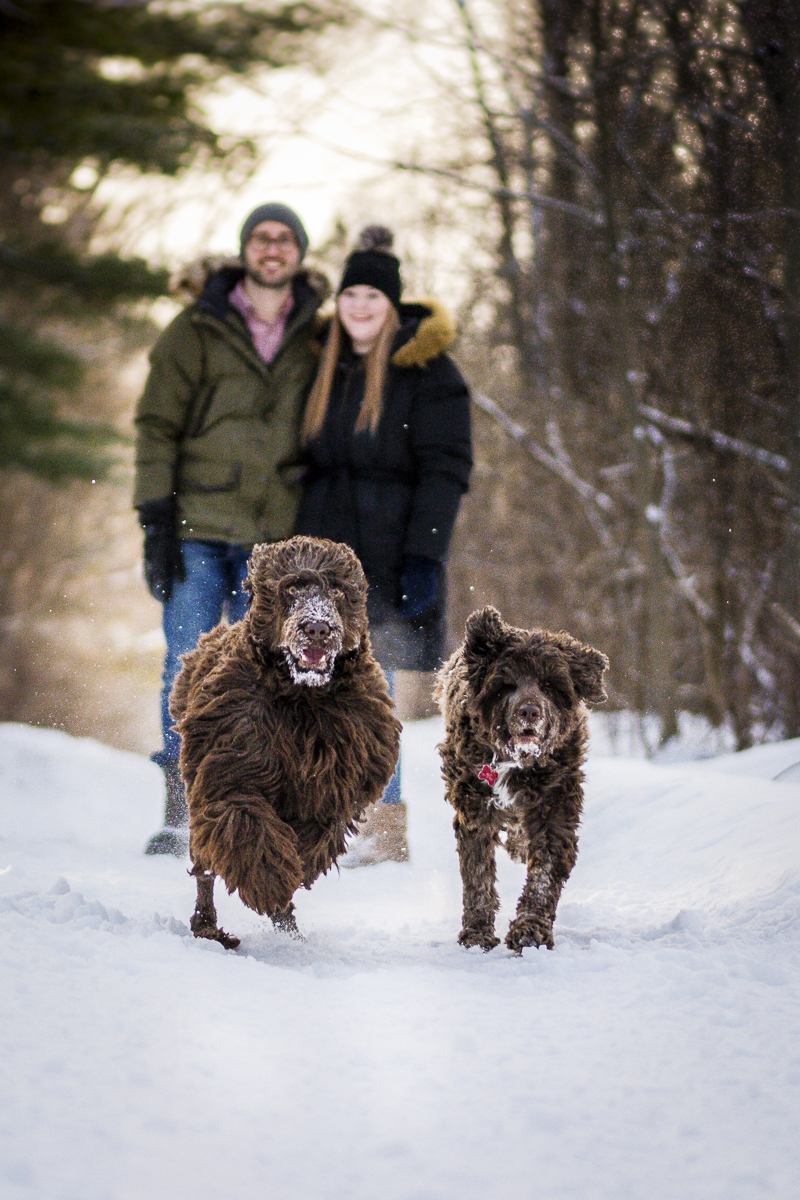 dogs running in the snow with humans behind them, winter family photos ©Beth Alexander Photography