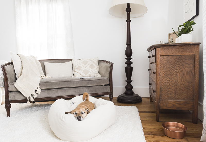 senior dog sleeping in Nest Bolster Bed, ©Alice G Patterson Photography