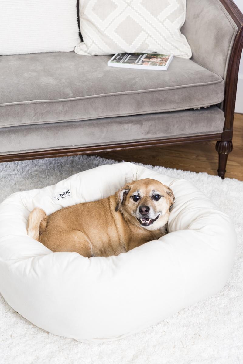 Happy dog lying on comfy dog bed, Puggle, Syracuse pet photographer