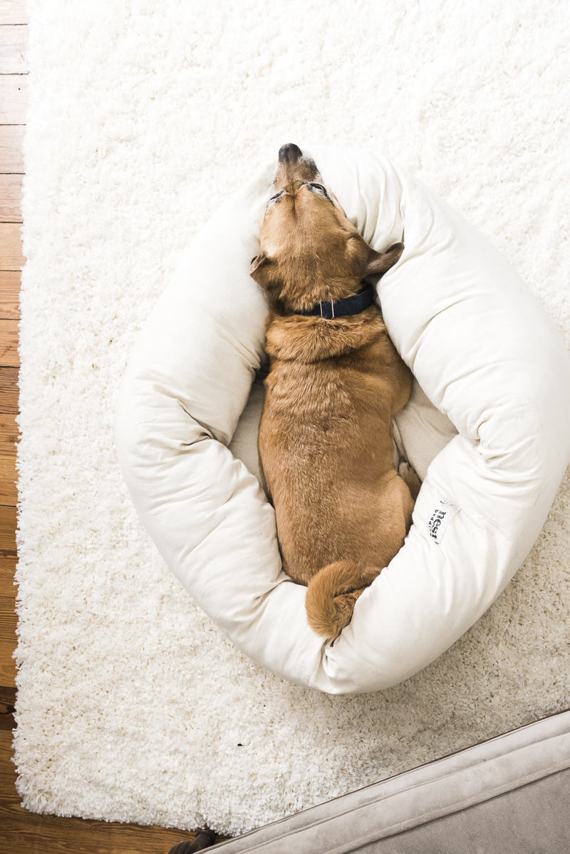 dog resting in nest bolster bed, nest bolster bed review, ©Alice G Patterson Photography | Syracuse dog photography