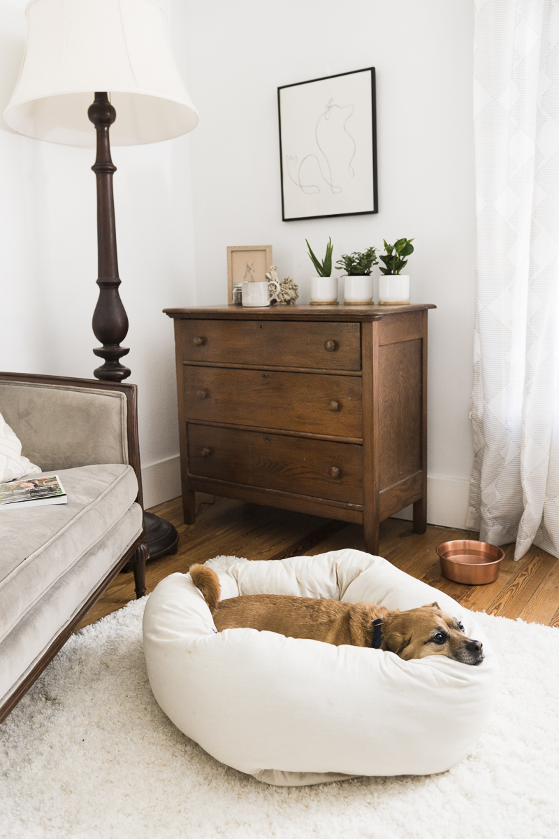 Puggle in Nest dog bed, enviromentally friendly dog bed ©Alice G Patterson Photography