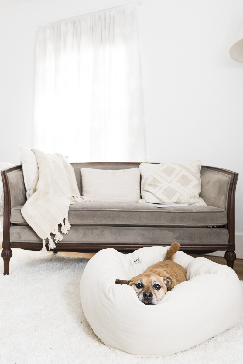 dog resting comfortably in Nest bolster bed, Nest dog bed review
