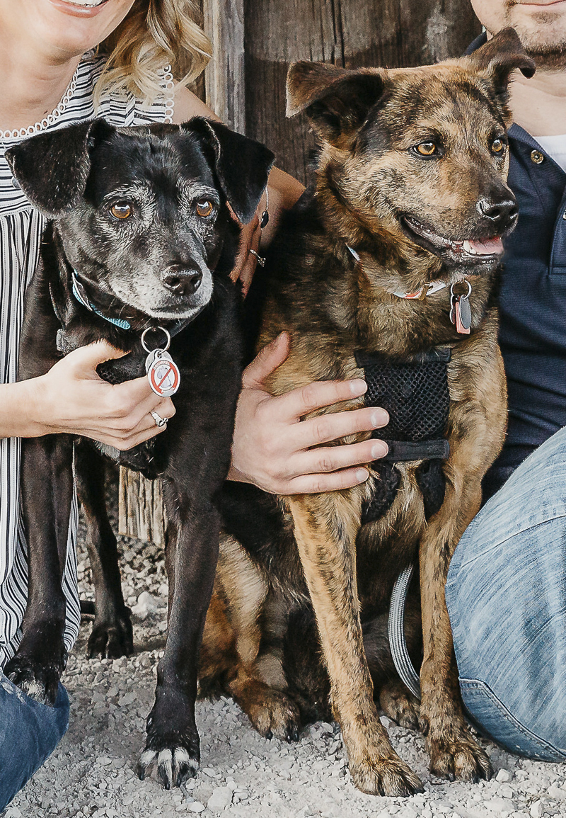 senior Patterdale Terrier and GSD mix, lifestyle dog photography ©Irish Eyes Photography, squirrel patrol tag