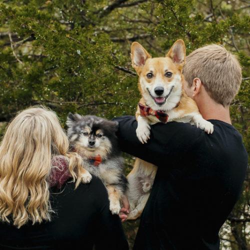 Happy Tails:  Todd  the Corgi and Inuk the Pomeranian