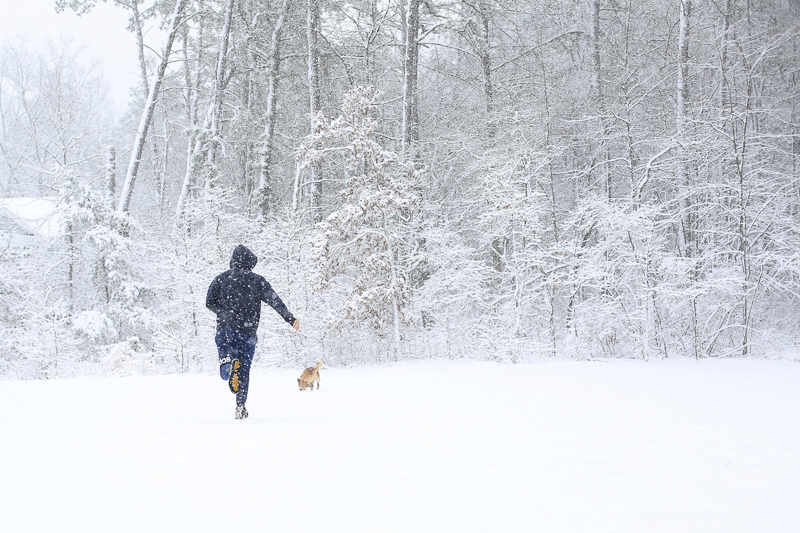 dog and man playing in the snow, winter pet portraits ©Melissa Joy Creative