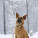 Happy Tails:  Rue the Mixed Breed