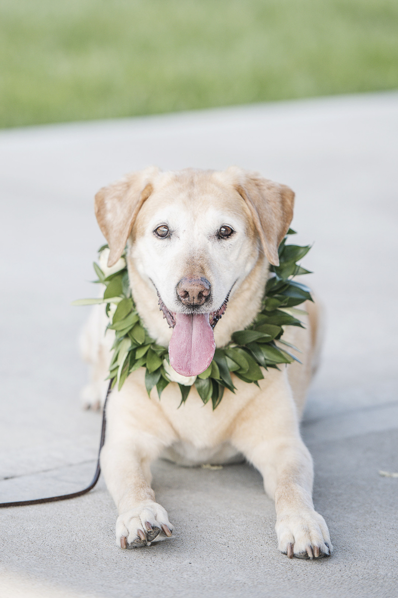 Yellow Lab wearing floral collar | © epagaFOTO | dog-friendly wedding, Wild Hill Wedding & Events