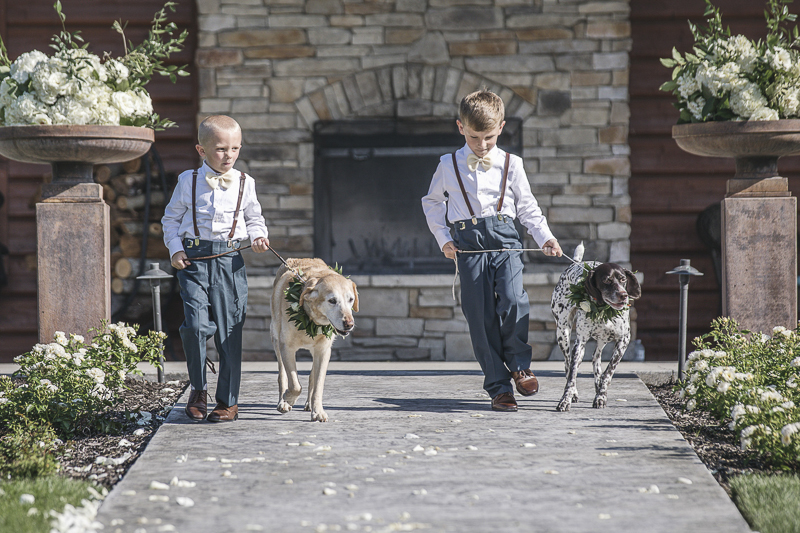 dog ringbearers, little boys walking dogs down the aisle, © epagaFOTO | dog-friendly wedding
