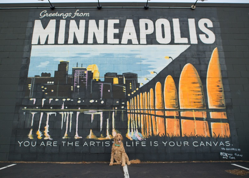 Spencer the Goldendoodle greetings from Minneapolis mural ©About A Dog Photography