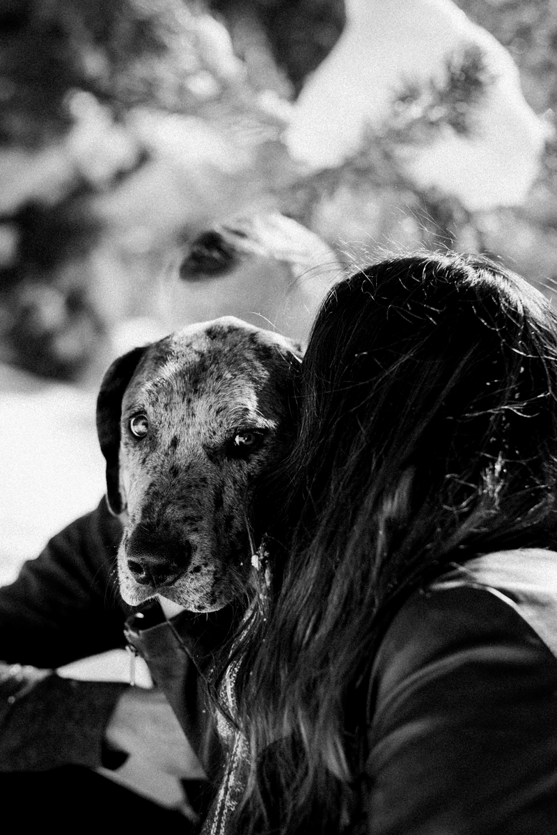 Great Dane mix looking over dog mom's shoulder, dogs are family, ©misterdebs photography | lifestyle family and pet photography