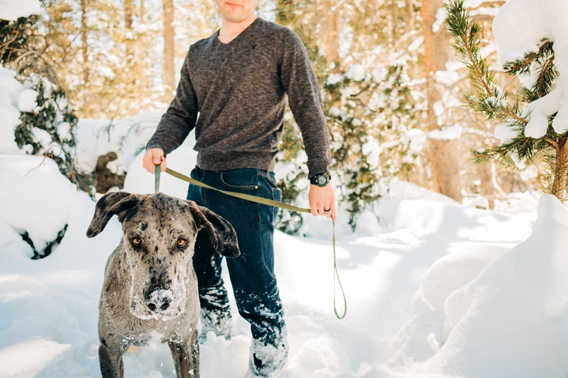 man and his Great Dane mix, dog with snow on his nose | ©misterdebs photography | South Lake Tahoe pet photographer