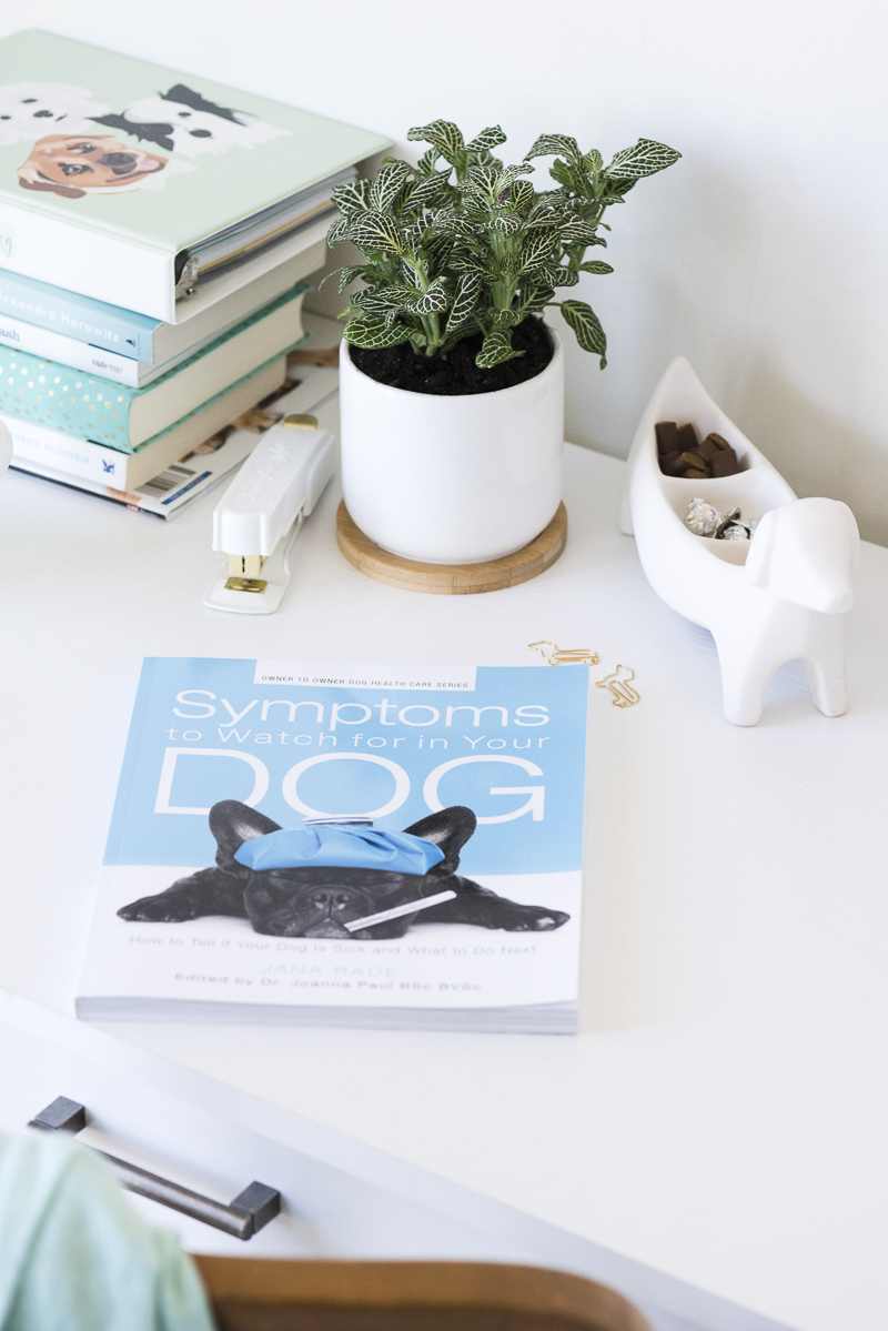©Alice G Patterson Photography | Symptoms To Watch Out For In Your Dog-review and giveaway