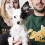 Puppy Love:  Juno the Australian Shepherd Mix