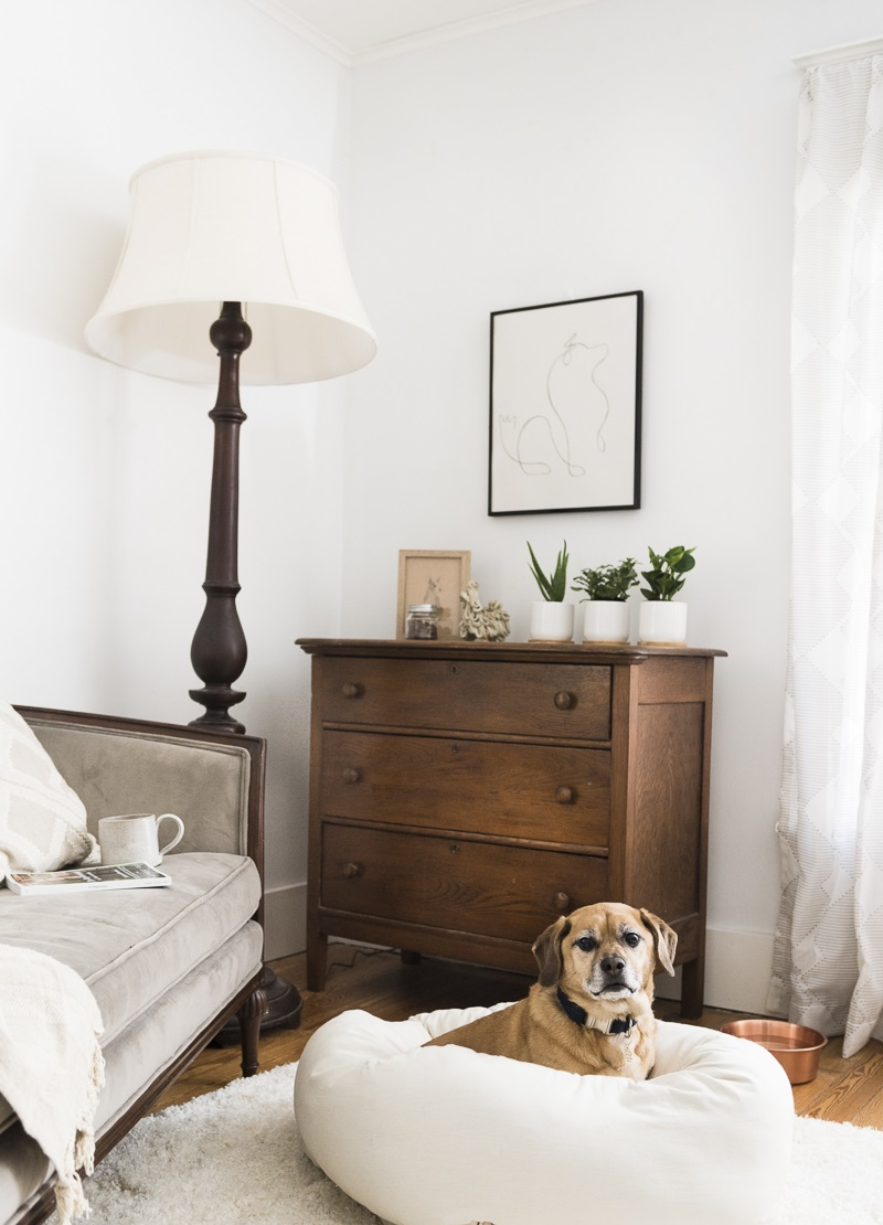dog-friendly bedroom, vintage furniture, modern dog art, dog at home, ©Alice G Patterson Photography | Syracuse dog photographer