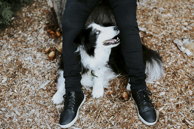 Border Collie looking up between human's feet, ©Dogfolk | Melbourne Pet Photographer | Storyteller - in home dog photography