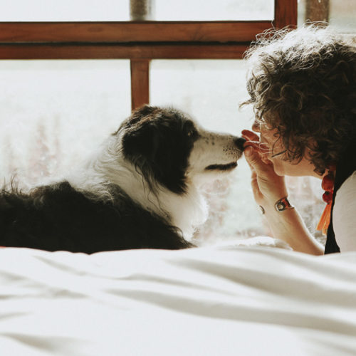 In Loving Memory:  Eddie the Border Collie