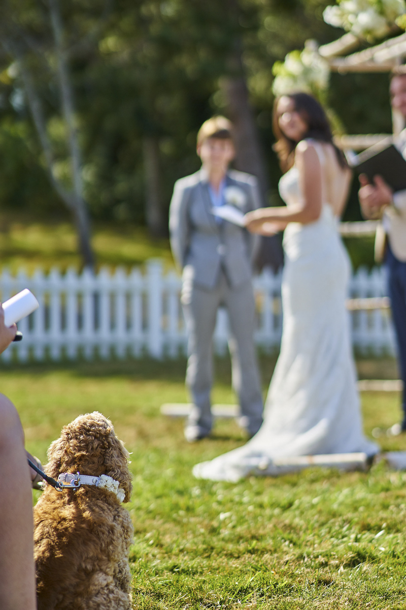 dog watching wedding ceremony, Seattle dog-friendly wedding ©Lavender Bouquet Photography Seattle wedding photographer