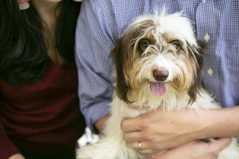 soft wire piebald dachshund, Nashville Pet Photographer, Mandy Whitley