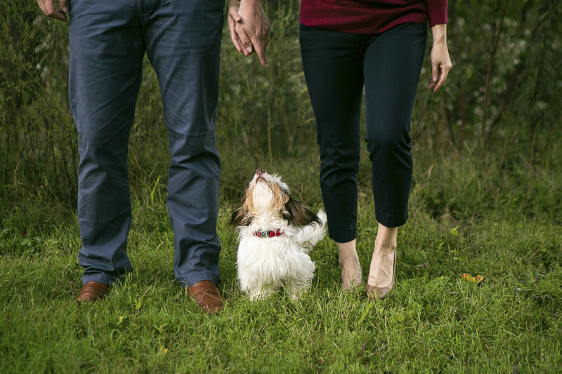 adorable piebald dachshund looking up at humans. Nashville family portraits with pets | © Mandy Whitley Photography