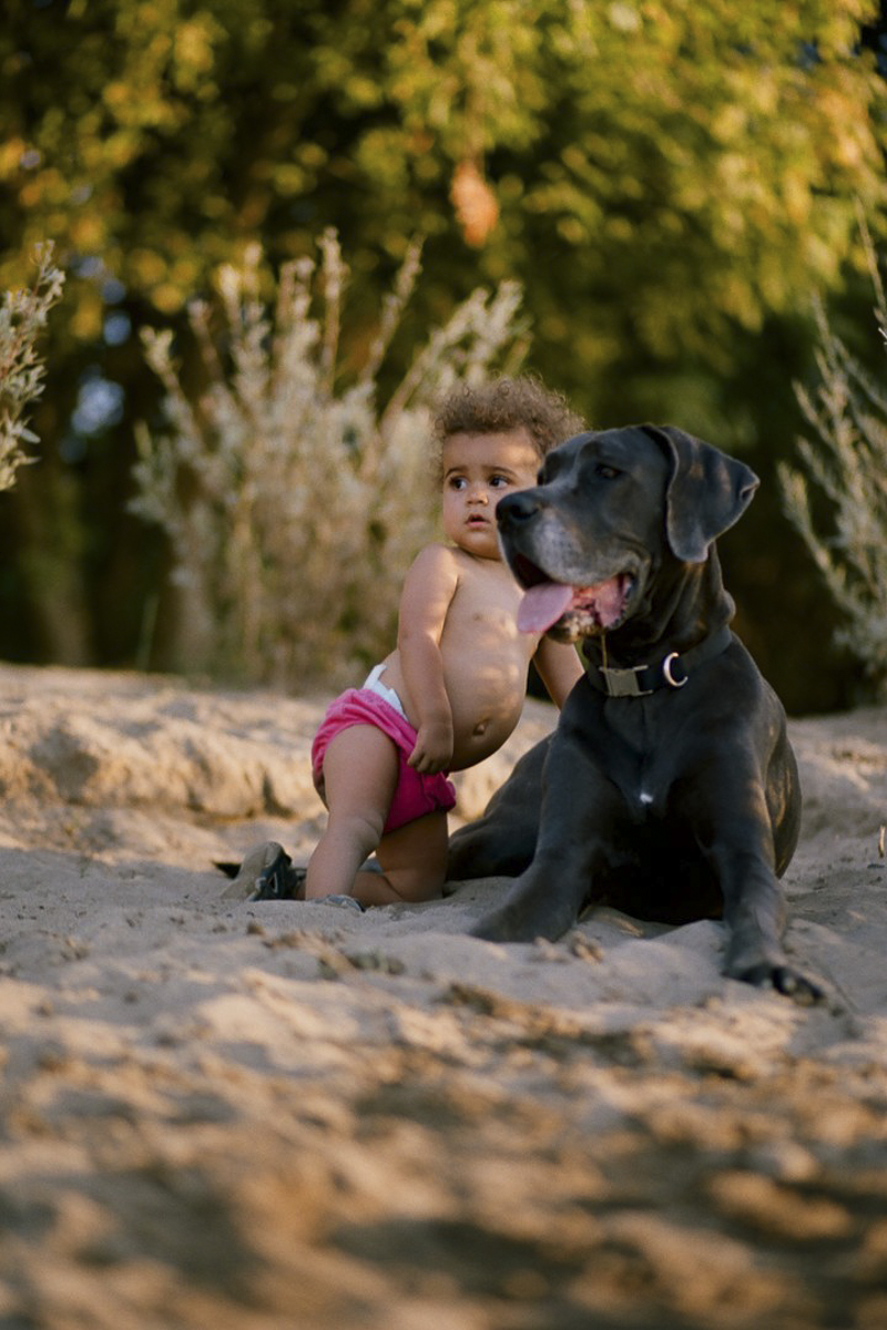 toddler and her blue Great Dane, natural portraits ©Rachel Sima Photography | Sacramento dog-friendly family photographer