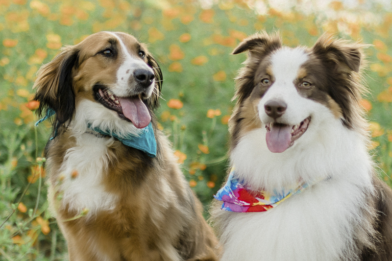 dogs and flowers, ©Yesenia Bocanegra Photography | Raleigh dog photography
