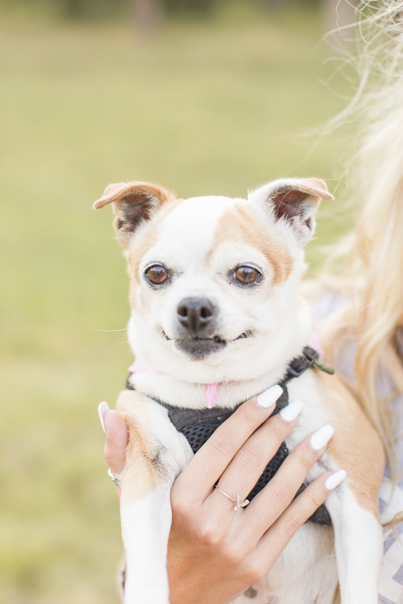 Chihuahua Pug mix, dog-friendly senior portraits | ©Hayden Esau Photography | Casper, WY senior portraits