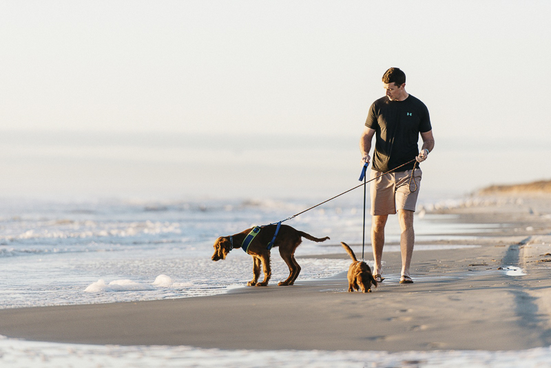 dogs and man at the beach, beach dogs, ©Dailey Alexandra Photography | lifestyle dog photography,
