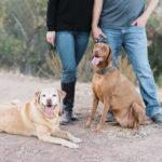 Happy Tails:  Abbie and Tucker In Ojai, California
