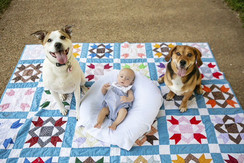 15 week baby and family dogs on quilt, family portraits ©Mandy Whitley Photography