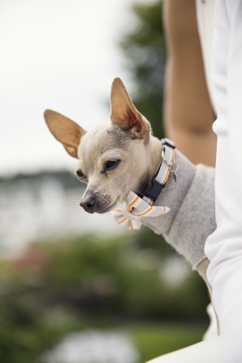 bride and her dog, ©Stephanie Cristalli Photography | dog-friendly wedding