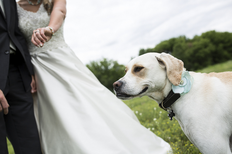 happy dog with bride and groom   ©Penny Photographics