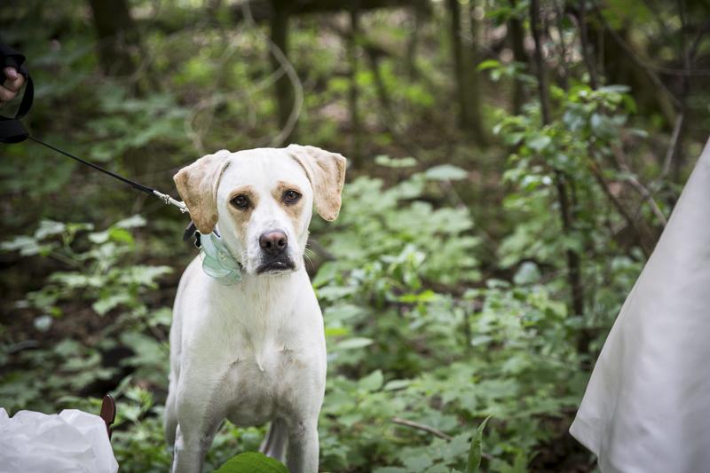 ©Penny Photographics   Minnesota wedding photography for adventurous couples, dog-friendly wedding