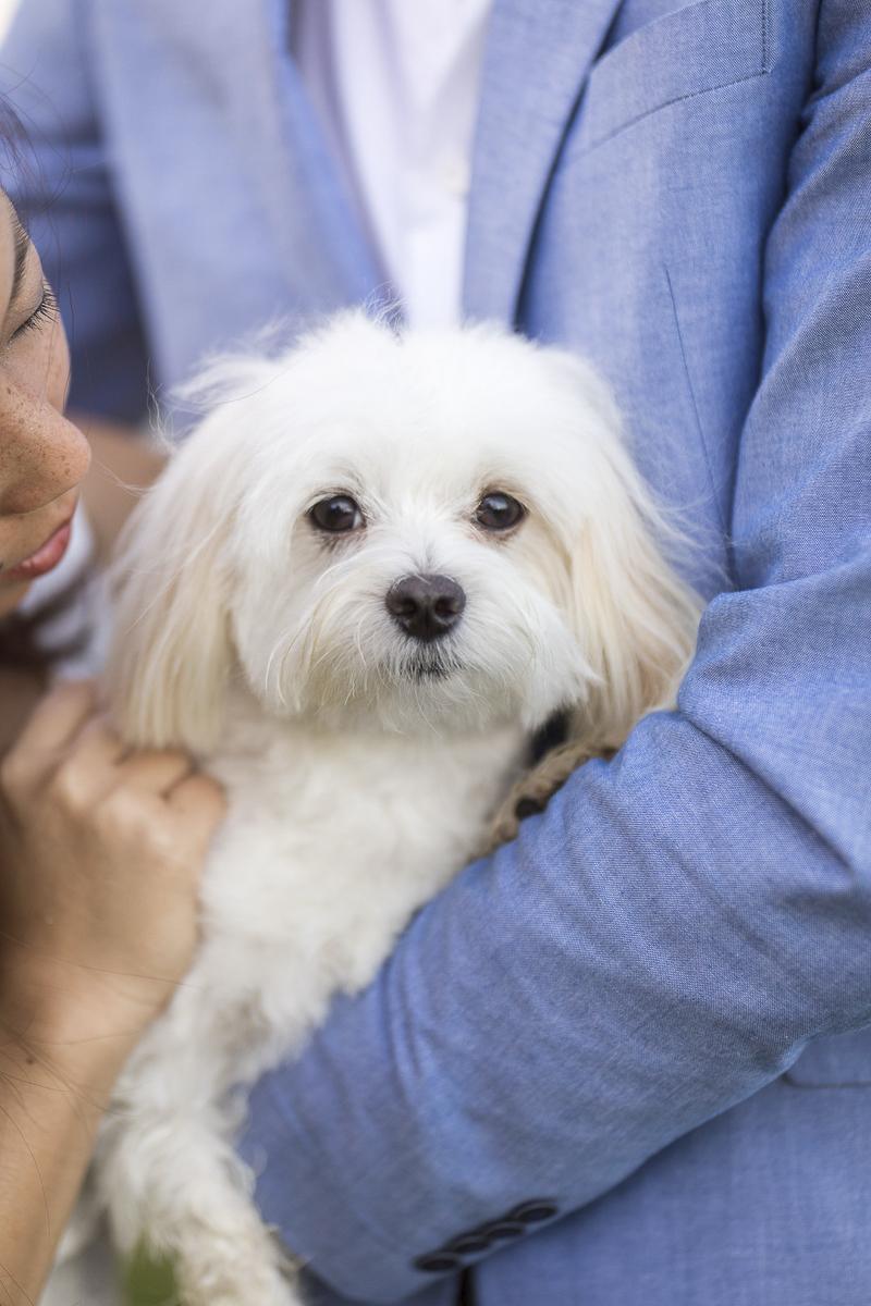 VIVIDfotos-engagement photos with Maltese, Honolulu lifestyle dog photography