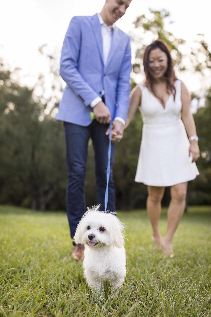VIVIDfotos-engagement photos with Maltese, Honolulu, HI